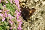 Extrémní forma z přírody, rub, střední Čechy, Martinice u Votic, 3.7.2014. Foto D. Hachlová
