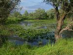Biotop, jihovýchodní Slovensko. Foto M. Hrouzek